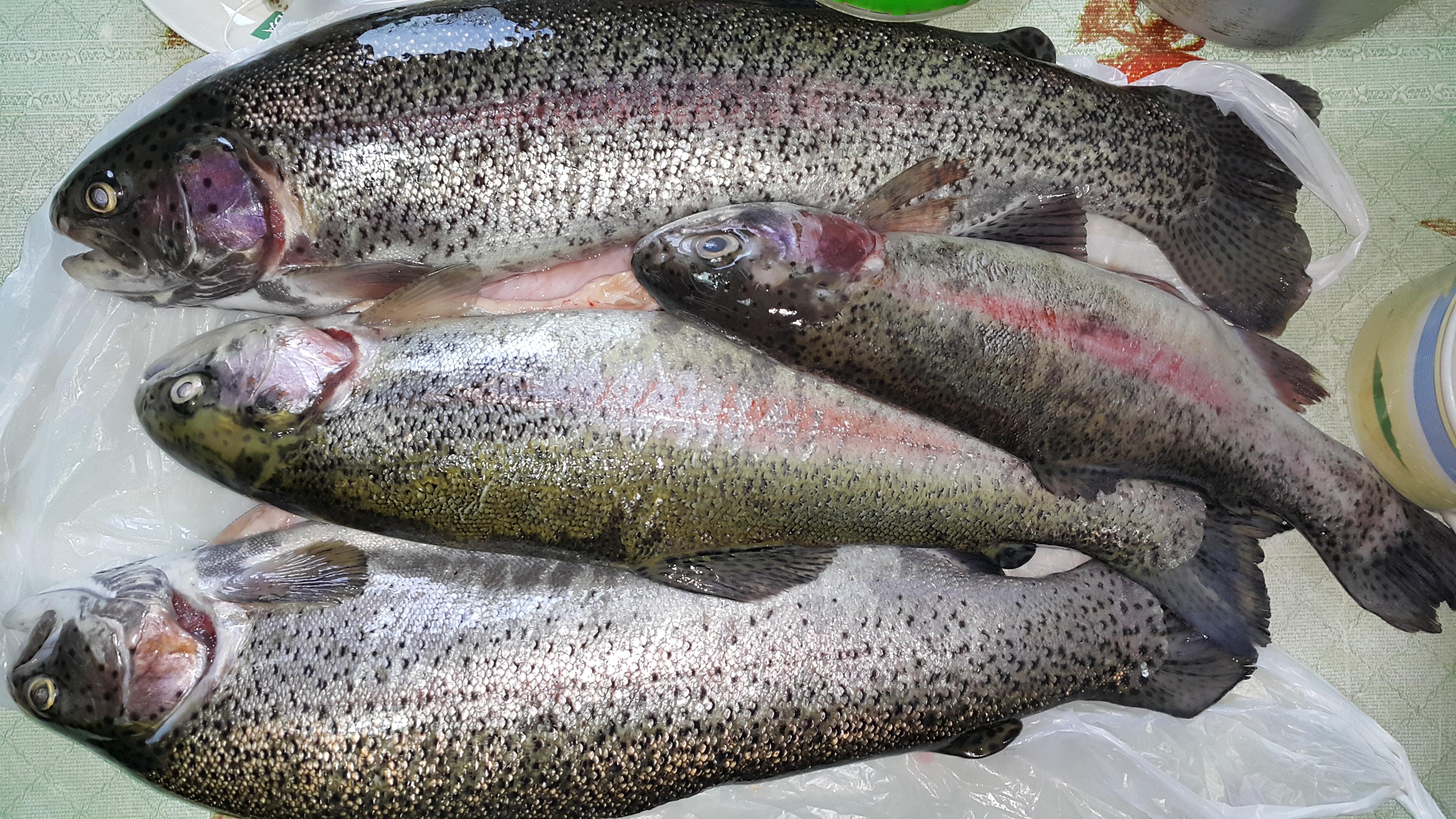 где рыбалка в ялте
